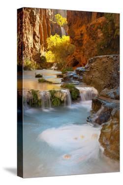 Sunlight Illuminates Cottonwoods Above Havasu Creek and Its Falls by Derek Von Briesen