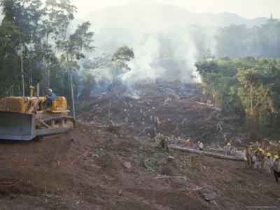 Clearing Forest for Building of the Forest Edge Highway in High Jungle Region of Tarapoto, Peru