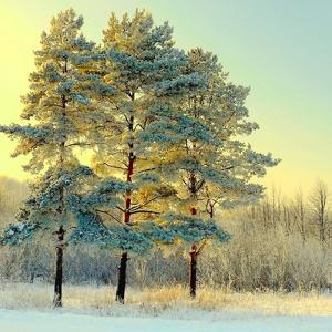 Beautiful Landscape with Winter Forest by DeSerg