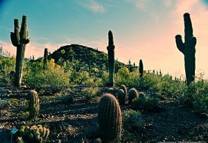 Desert Garden in Arizona