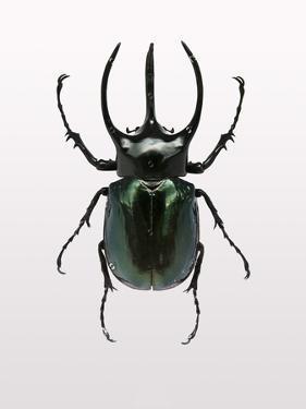 Beetle 2 by Design Fabrikken