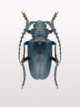 Beetle 3 by Design Fabrikken
