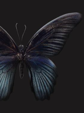 Black Butterfly on Grey by Design Fabrikken