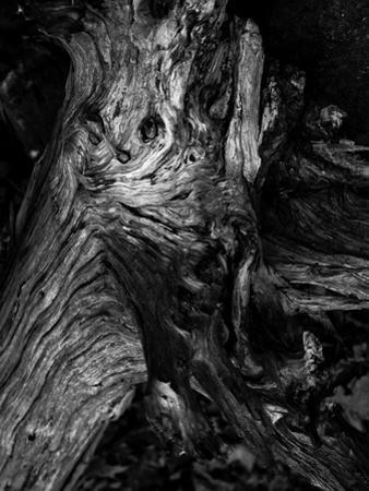 Black Wood by Design Fabrikken