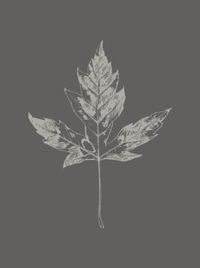 Botanica 5 by Design Fabrikken