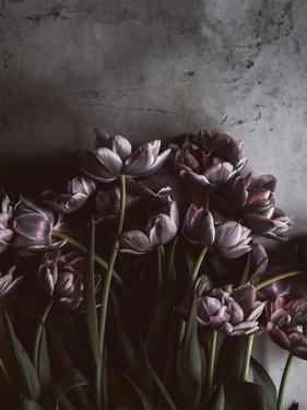 Dark Tulips by Design Fabrikken