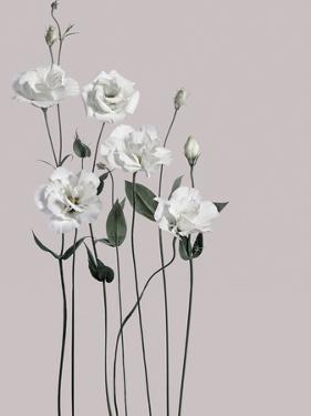 Flower 1 by Design Fabrikken