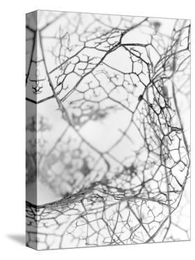 Leaf Skeleton BW by Design Fabrikken