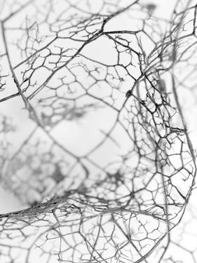 Leaf Skeleton BW by Design Fabrikken