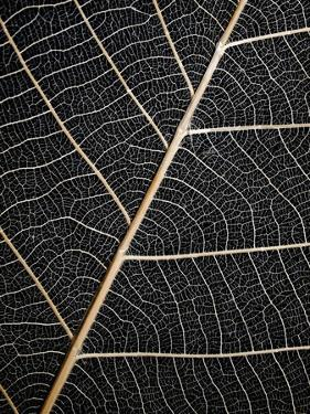 Leaf Veins by Design Fabrikken