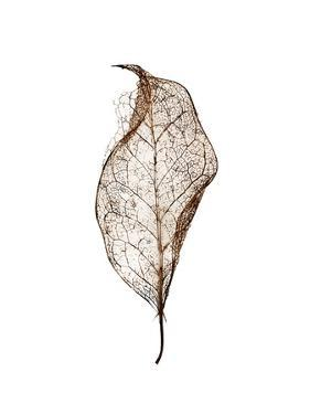 Leaf by Design Fabrikken
