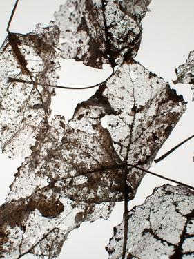 Leaves by Design Fabrikken
