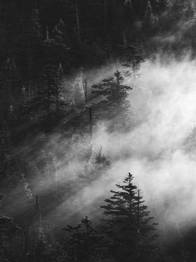 Misty Pine Woods by Design Fabrikken