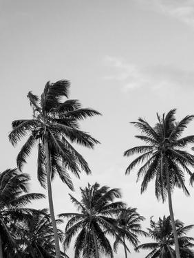 Palms in Grey by Design Fabrikken