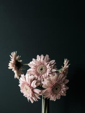 Pink Black by Design Fabrikken