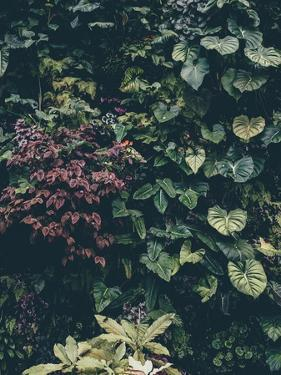 Plant Wall by Design Fabrikken