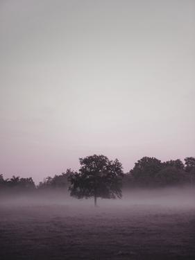Purple Light 2 by Design Fabrikken
