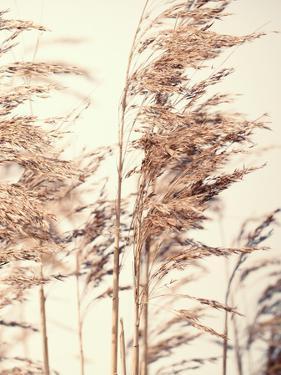 Reed 1 by Design Fabrikken