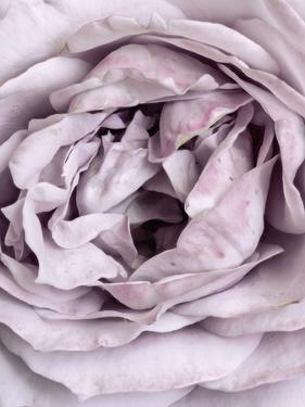 Rose Heart by Design Fabrikken
