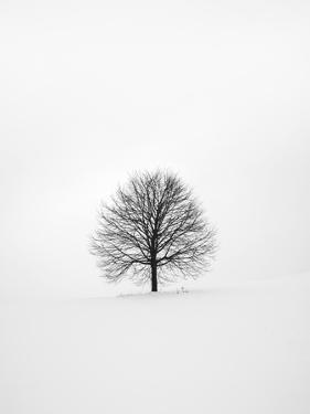 Solitary 1 by Design Fabrikken