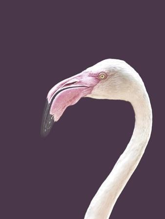 The Flamingo by Design Fabrikken