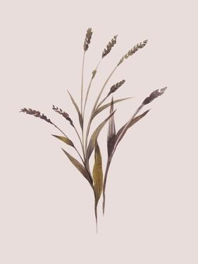 Wheat by Design Fabrikken