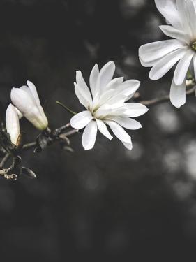 White Flowers by Design Fabrikken