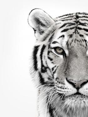 White Tiger by Design Fabrikken