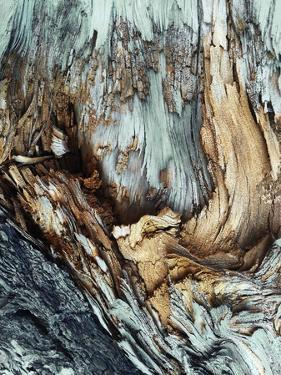 Wooden by Design Fabrikken