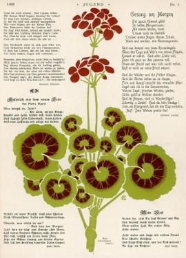 Design of Geraniums (Pelargoniums)