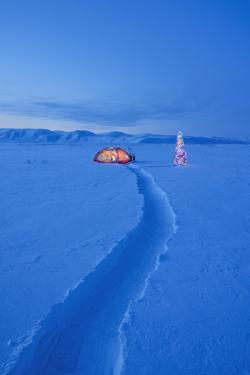 A Path Through The Snow Leads To A Tent Lit Up At Dawn With Christmas Tree by Design Pics