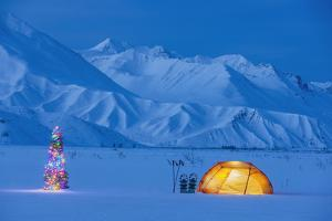 Backpacking Tent Lit Up At Twilight With Christmas Tree Next To It Alaska Range by Design Pics