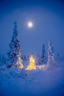 Christmas Tree With White Lights In A Hoarfrost Covered Spruce Forest, Alaska. by Design Pics