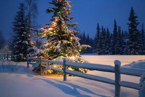 Decorated Christmas Tree Along Snow-Covered Fence Rail Night Anchorage, Southcentral Alaska Winter by Design Pics