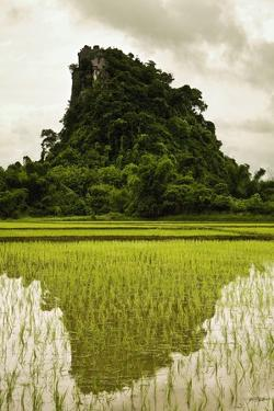 A Rice Field in Asia by Design Pics Inc