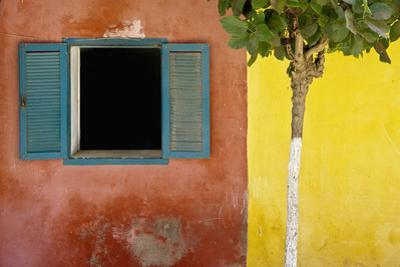 A Tree Outside a Colorful Building and a Window with Blue Shutters; Dakar Senegal by Design Pics Inc