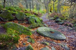An Abandoned Millstone Along a Path in Peak District National Park in Autumn; Derbyshire, England by Design Pics Inc