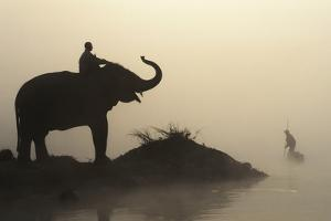 An Elephant with its Mahout Stand at Edge of the Rapti River Near Sauraha and Chitwan National Park by Design Pics Inc
