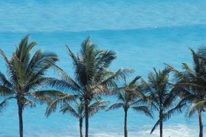 Beach in Cancun by Design Pics Inc