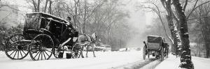 Central Park in Falling Snow by Design Pics Inc
