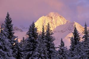 Chugach Mtns Bathed in Alpenglow Above Girdwood Ak Sc Winter by Design Pics Inc