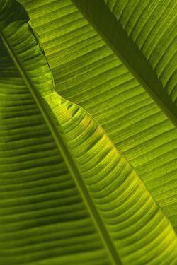 Detail of Palm Tree; Barbados by Design Pics Inc