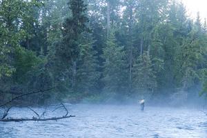 Fly Fisherman Fights Dolly Varden on the Line at Quartz Creek Kenai Peninsula Alaska Fall by Design Pics Inc