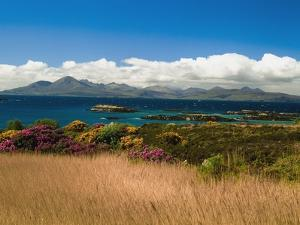 Gorse and Rhododendron Bushes Along Coast by Design Pics Inc