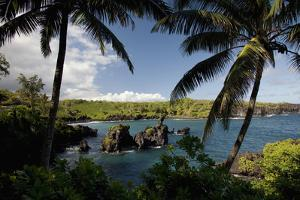 Hawaii, Maui, a Sunny View of Waianapanapa from Behind Palm Trees by Design Pics Inc