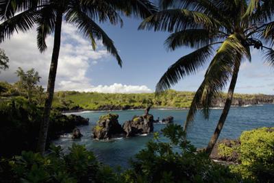 Hawaii, Maui, a Sunny View of Waianapanapa from Behind Palm Trees by Design Pics Inc