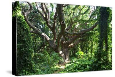 Hawaii, Maui, Honolua, a Tree Surrounded by Lush Green Vines by Design Pics Inc