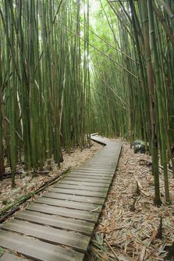 Hawaii, Maui, Kipahulu, Haleakala National Park, Trail Through Bamboo Forest on the Pipiwai Trail by Design Pics Inc