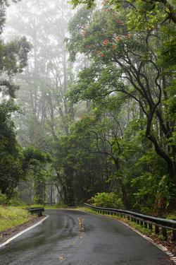 Hawaii, Maui, the Lush Road to Hana by Design Pics Inc
