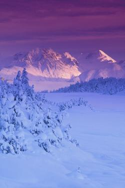 Hemlock Forest Chugach Mtns and Nf Turnagain Pass Sc Ak Winter Scenic by Design Pics Inc